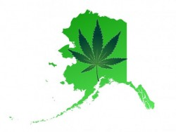 Alaska-Cannabis-Legalization-Sensi-Seeds-Blog-250x188
