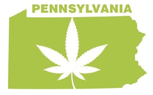 pennsylvaniaweed